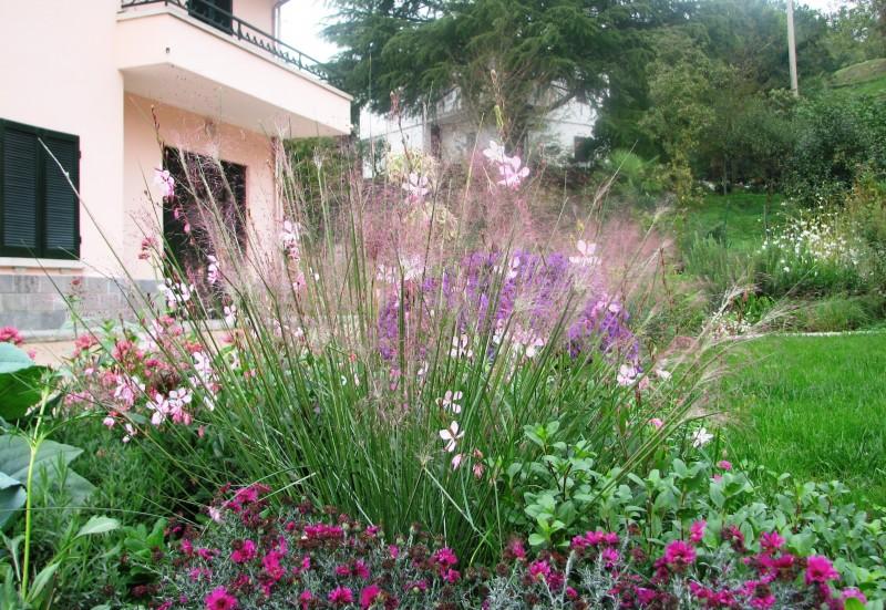 I nostri lavori per creazione giardini bordure miste for Piantine fiorite perenni