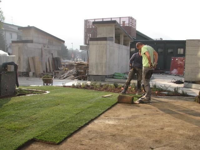 I nostri lavori per tappeti e manti erbosi a semina e a for Prato pronto